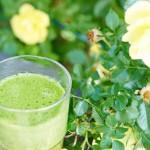 Grüne Smoothies – Essbare Biomasse